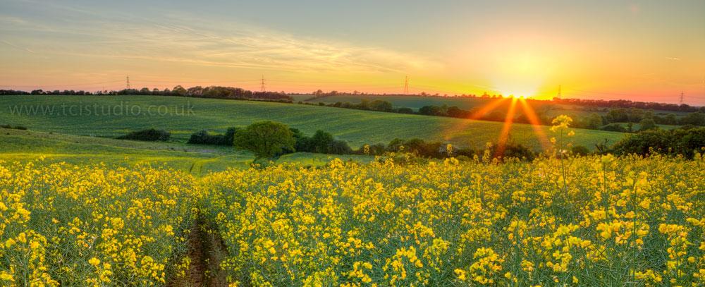 Sunset field – Hadstock Essex UK